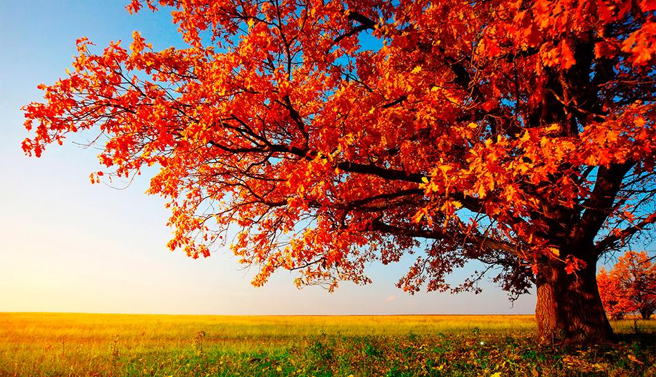 Descubre los bellos paisajes españoles de otoño – Maduralia